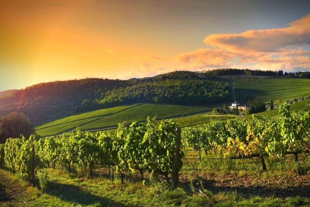 February's Wine of the Month: Chianti Classico