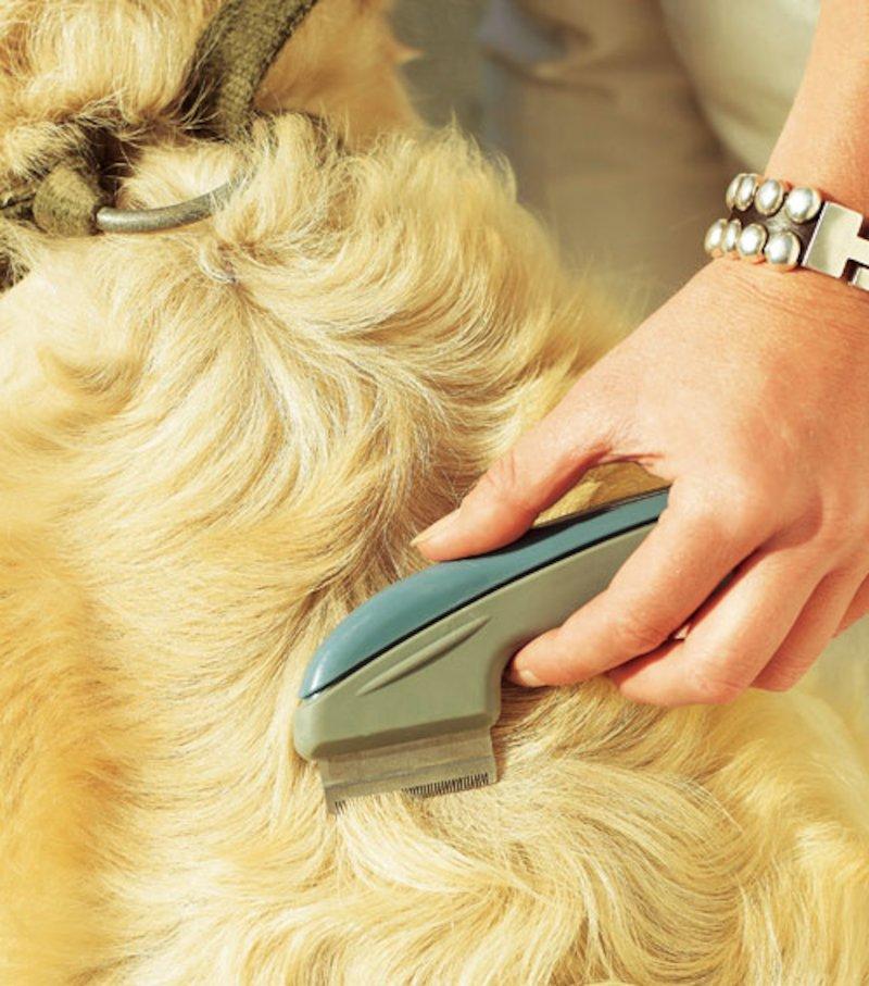 Cepillo pelo gato/perro