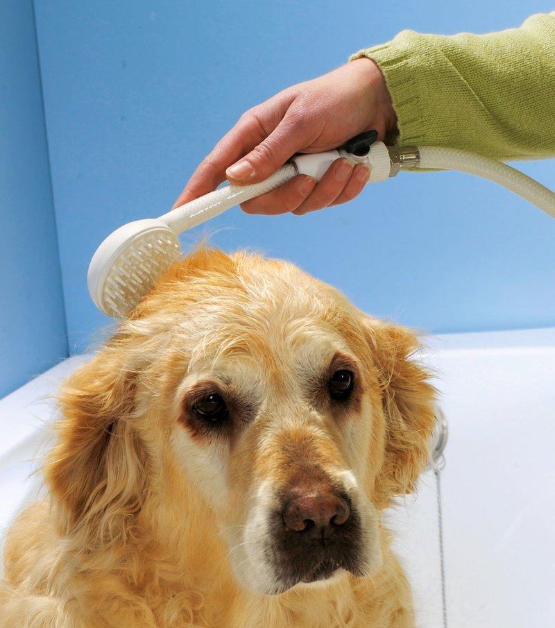 Ducha para mascotas