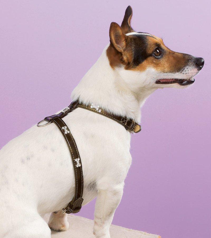 Arnés perro