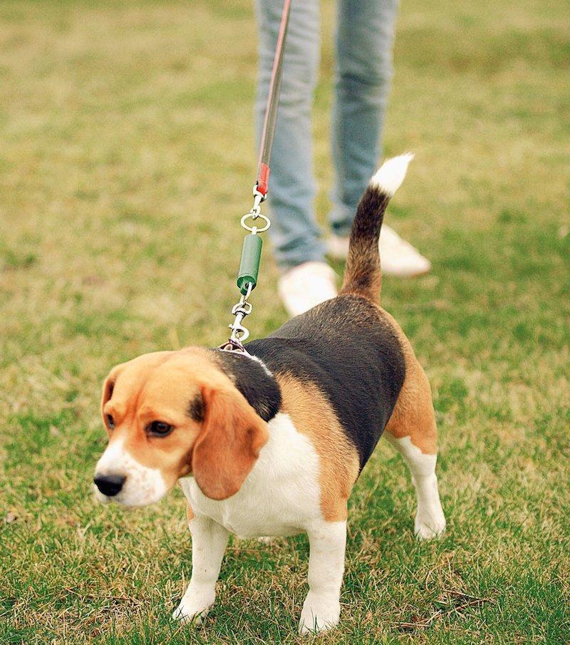 Adiestrador de paseo para mascotas