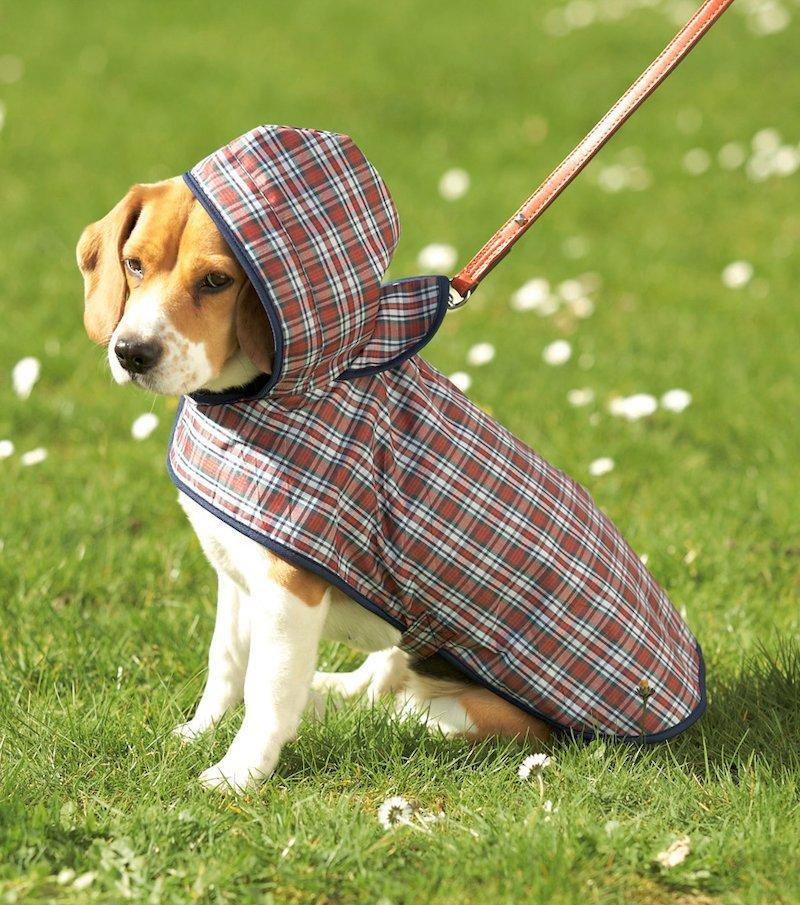 Impermeable especial para perros
